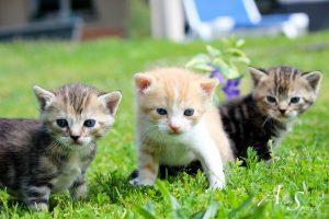 bebes-chatons