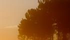 brouillard d'automne dans les landes