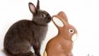 vrai lapin et lapin en chocolat