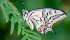 un papillon sur une feuille de fougère