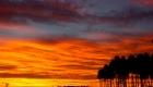 coucher de soleil orange dans les pins