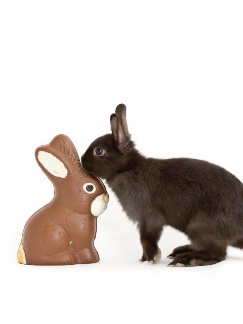 lapin renifle du chocolat