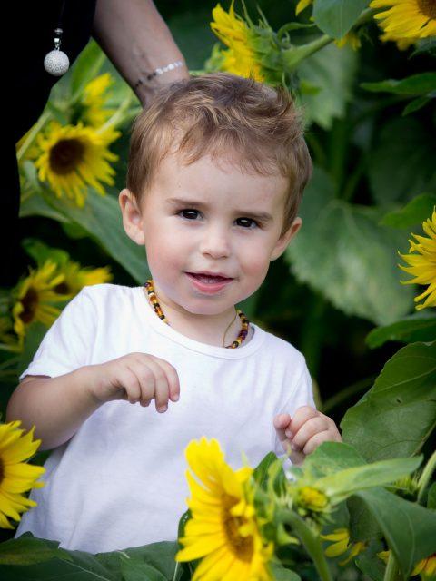 petit garçon dans un champs de tournesol