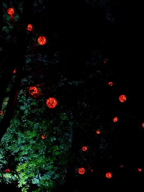 arbres illuminés