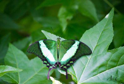 Visite de la serre aux papillons à Sanguinet dans les Landes.