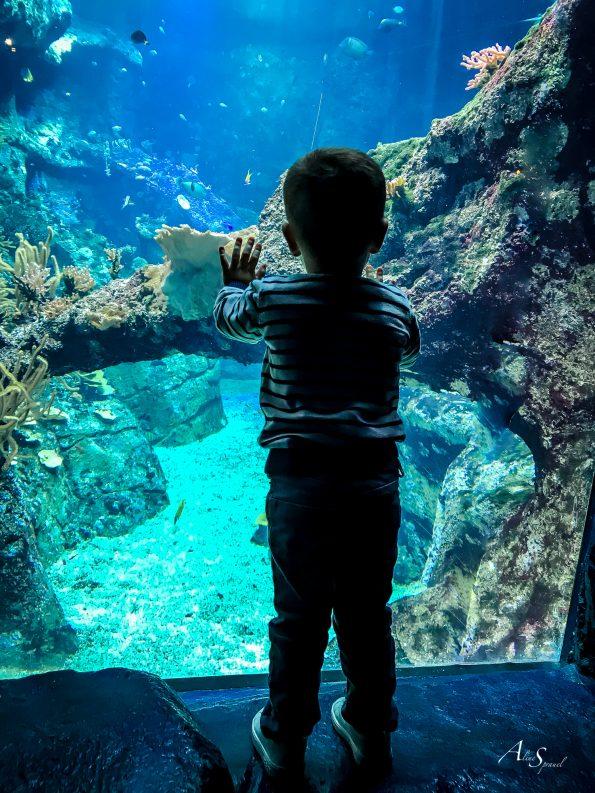 enfant derrière une vitre d'aquarium