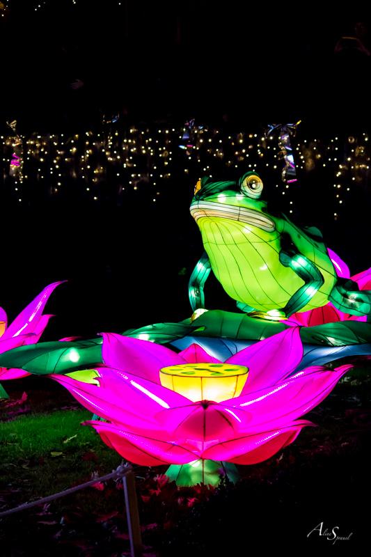 grenouille illuminée