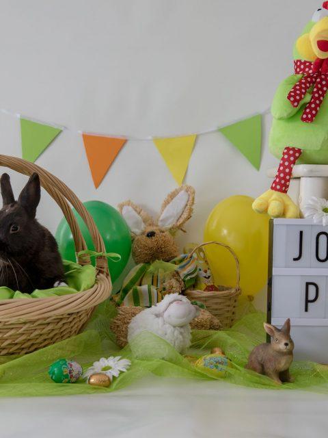 joyeuses pâques lapin