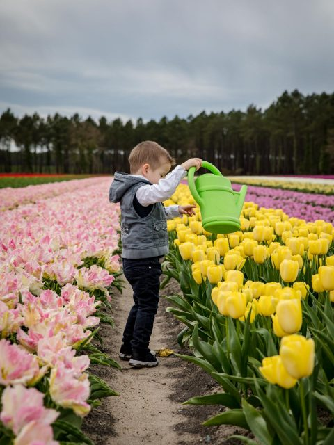 enfant arrose tulipes