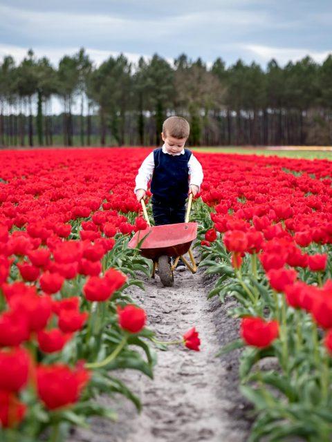enfant dans les tulipes