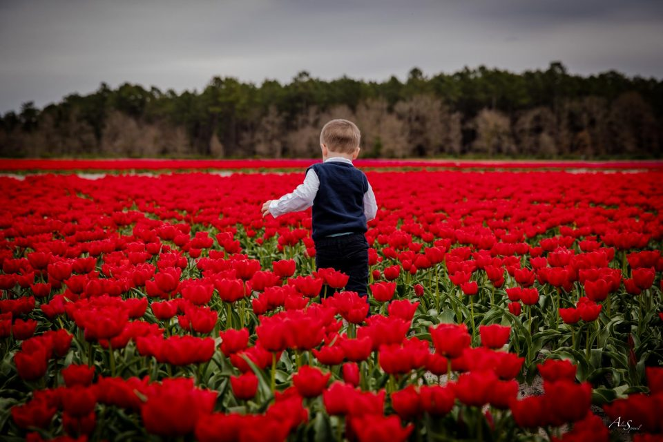 enfant dans un champs de tulipes
