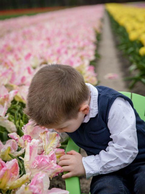 enfant renifle fleurs