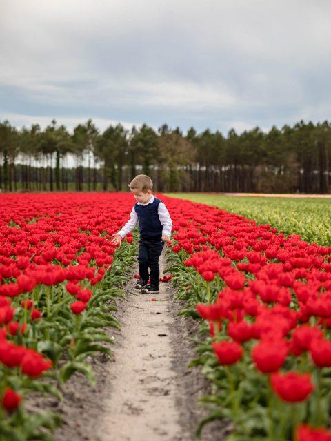 enfant tulipes