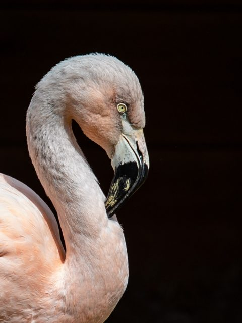 flamant rose zoo labenne