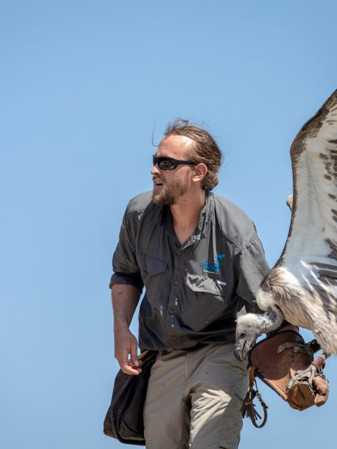 vautour alsace