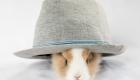 lapin chapeau