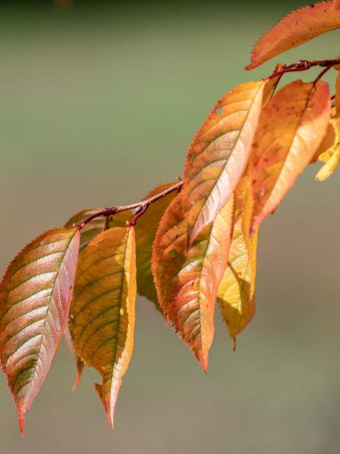 feuilles oranges