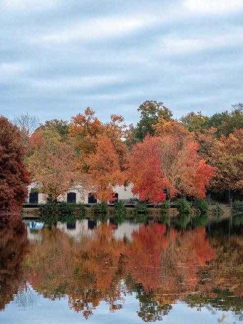 reflets automne