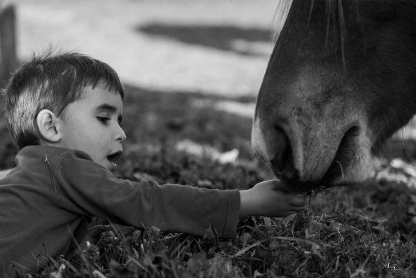 enfant donne a manger au cheval