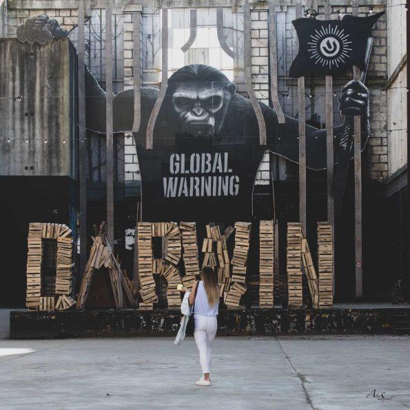 singe darwin