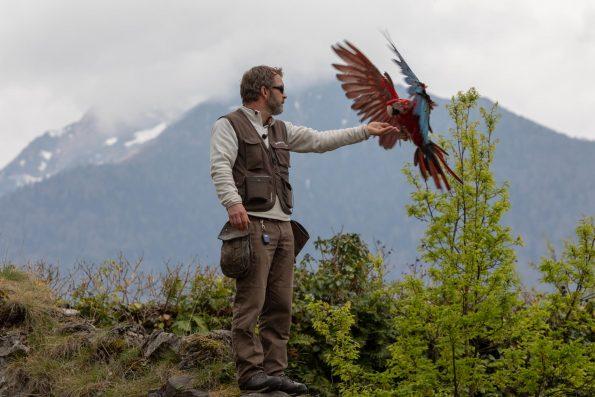 fauconnier pyrénées