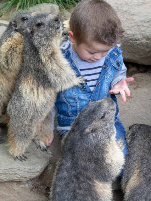 parc marmotte pyrénées