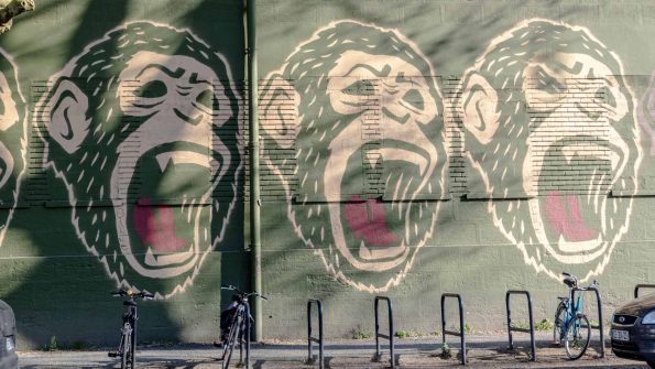singes bordeaux