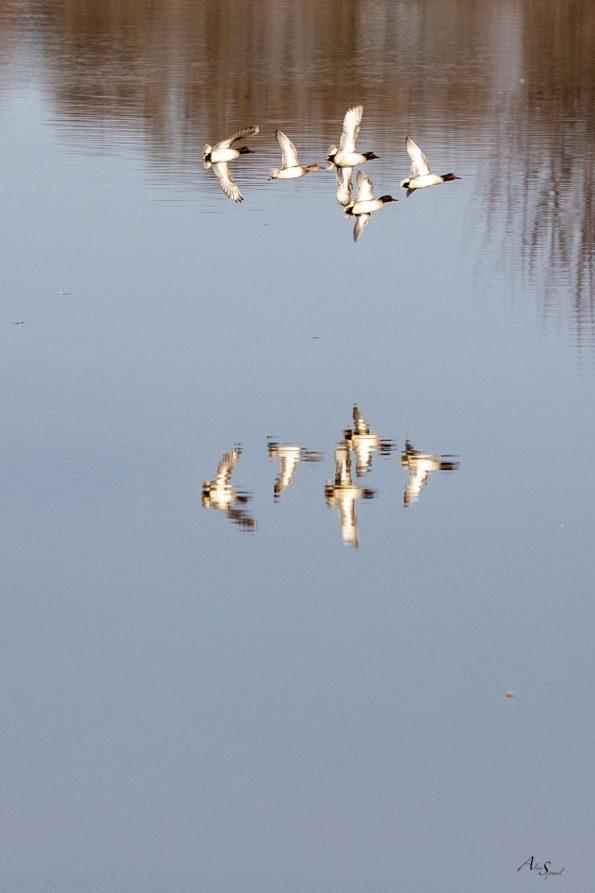 vol canards
