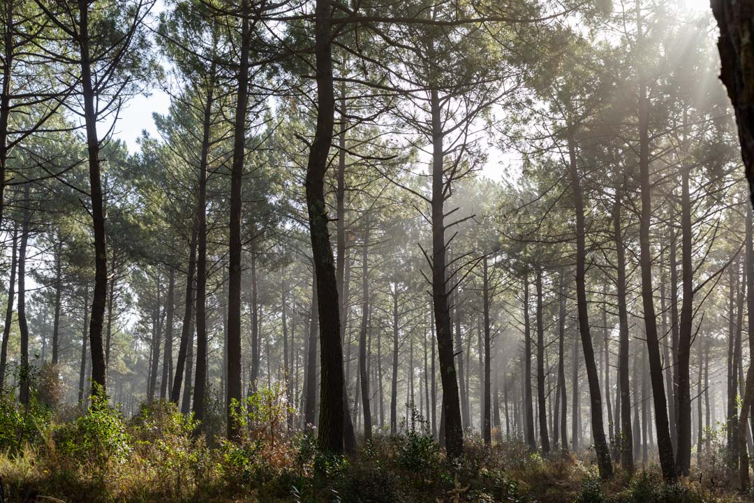 foret-rayons-soleil