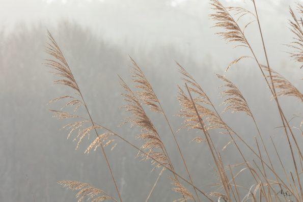 herbes-hautes