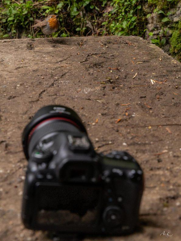 appareil-photo-oiseau