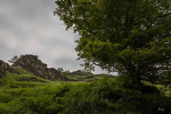 arbre-rando-pays-basque