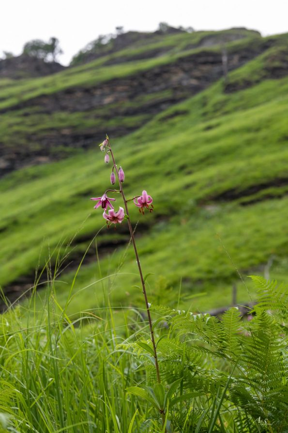fleur-rando