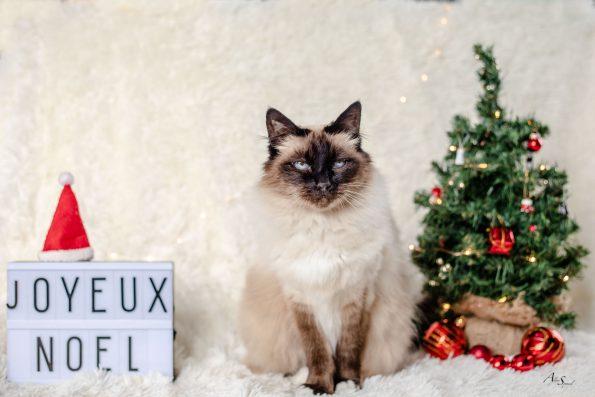 joyeux-noel-chat