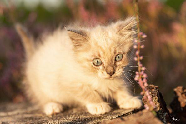 bebe-chaton-bruyere