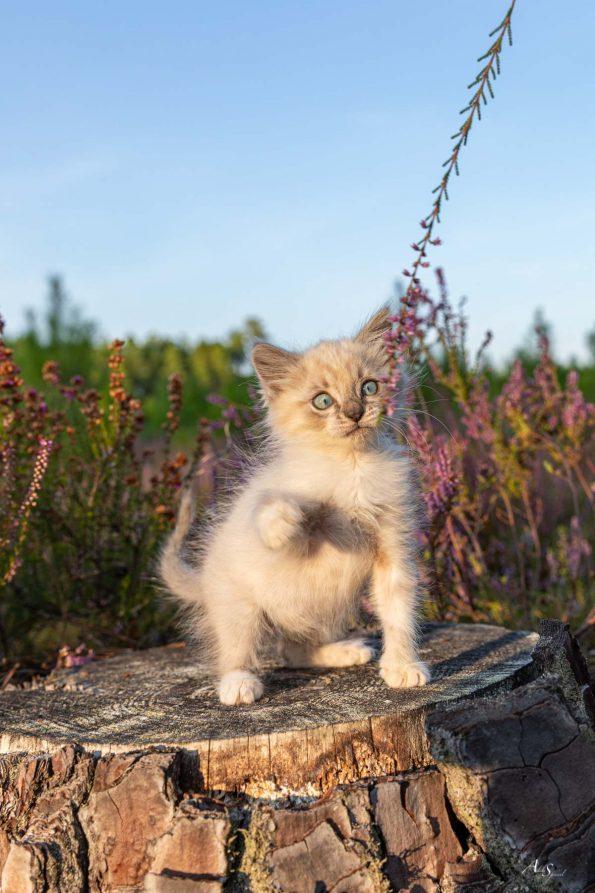 chaton-bebe