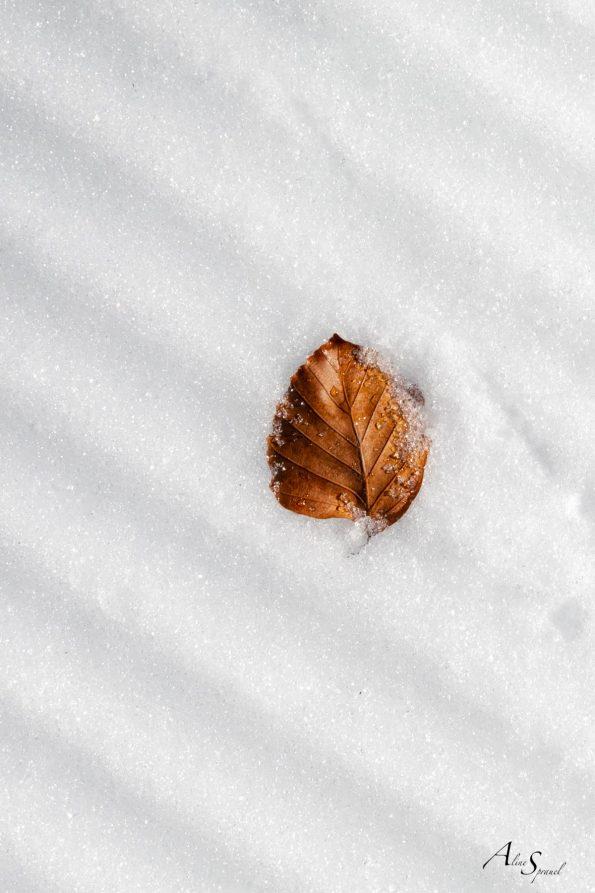 feuille-neige