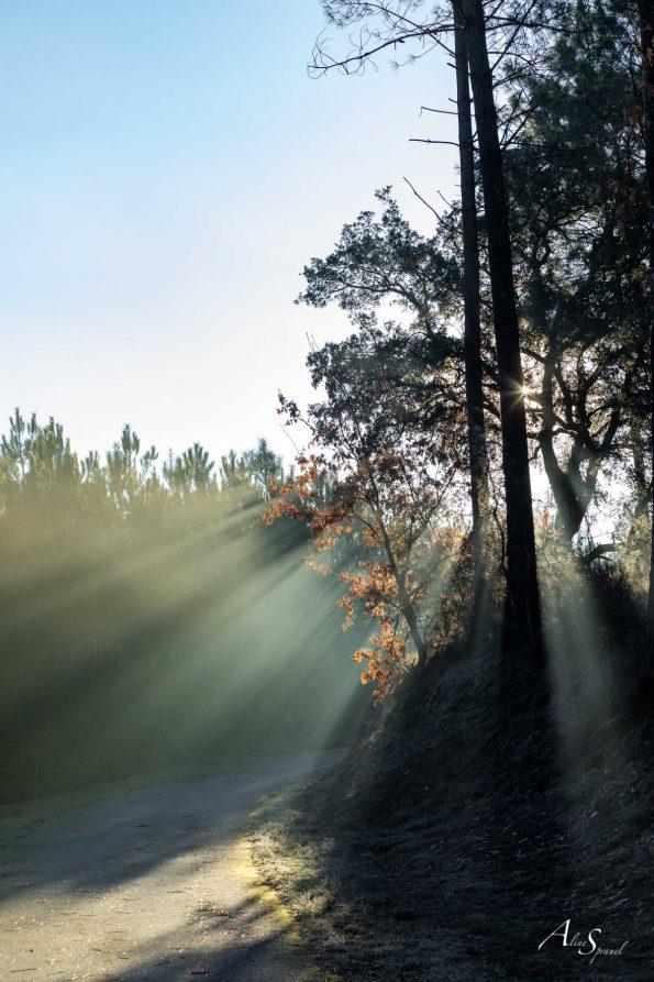 filet-lumiere-arbre