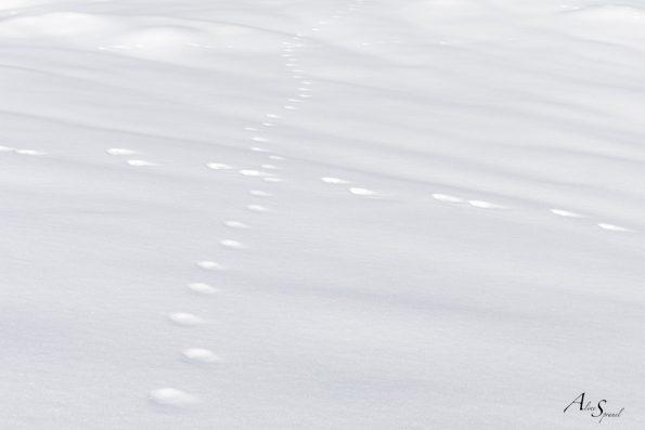 neige-minimalisme