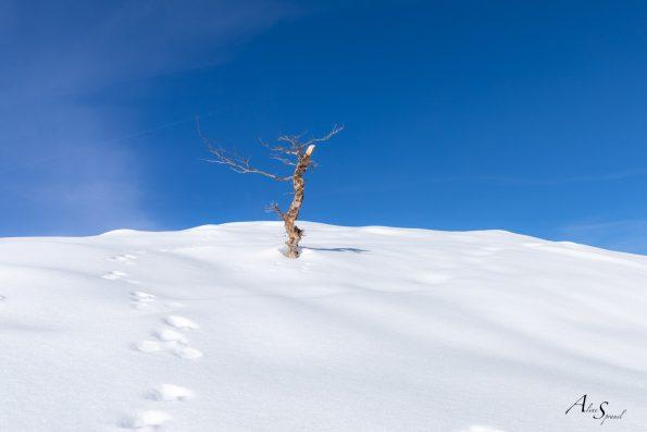 photo-minimalisme-neige