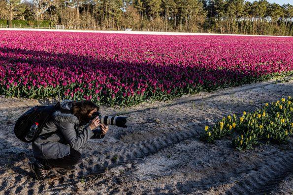 photographe champs de tulipes landes