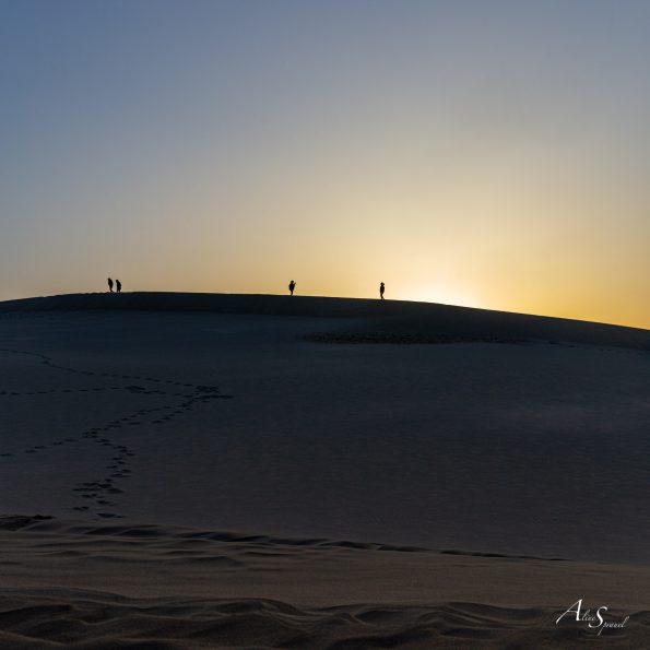 silhouettes dune